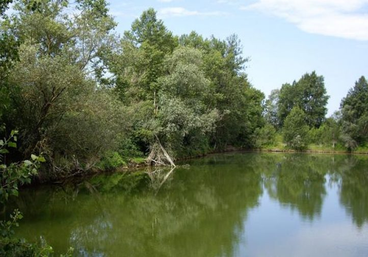 Bill's Lake 2 Image