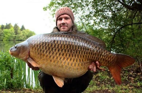 Carp fishing at Cas en Lac close to Brittany