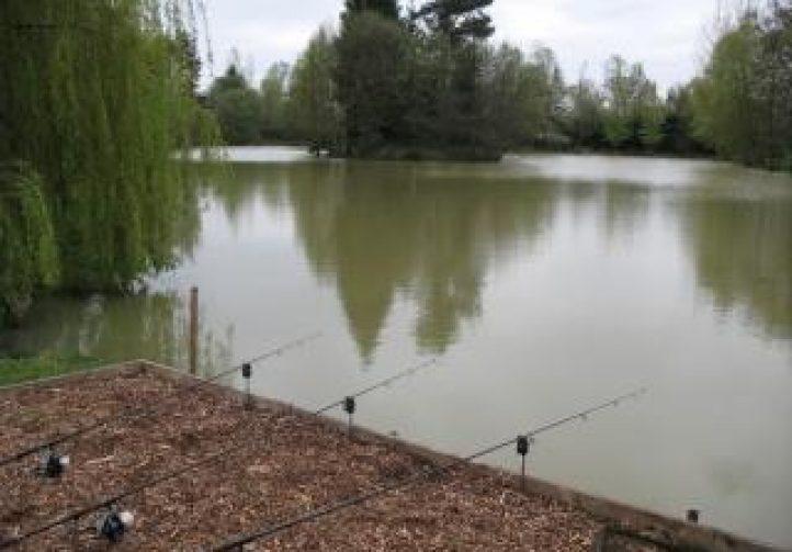 Firs Lake Image