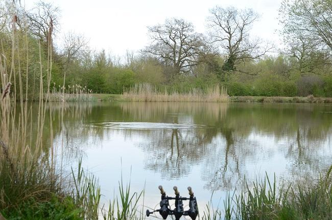How to approach spring carp fishing