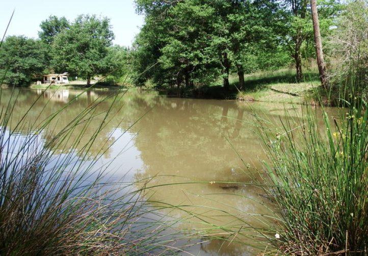 Martins' Lakes – Jungle Lake Image